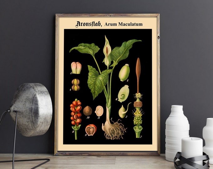 Rare Botanical Print on Black Background Black Botanical Art German Educational Chart Botanical Chart School Chart Poster Plant WB-BLBOT6