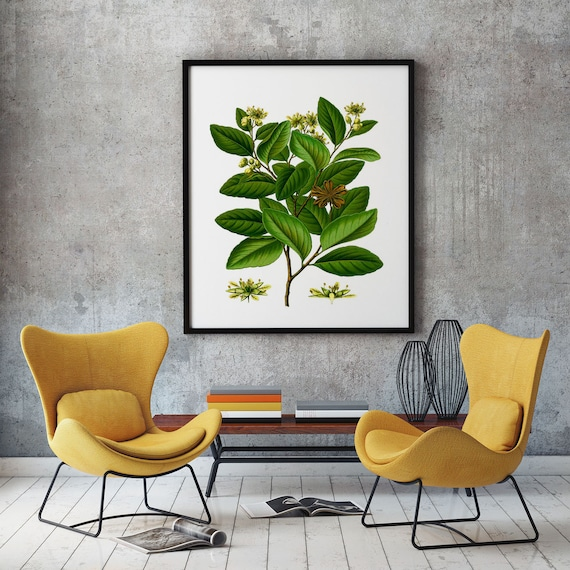 Large Botanical Print Leaf Botanical Illustration from Kohler's Medizinal Pflanzen Medicinal Decor Plant Decor Large Plant Poster WBBOT57
