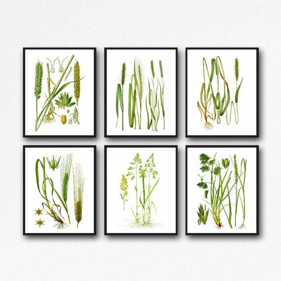 Grass Botanical Prints Set of 6 Botanical Posters WB149-154