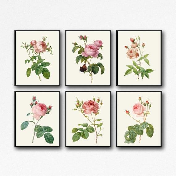 Rose Decor Set of 6 Rose Botanical Prints WBOT143-148