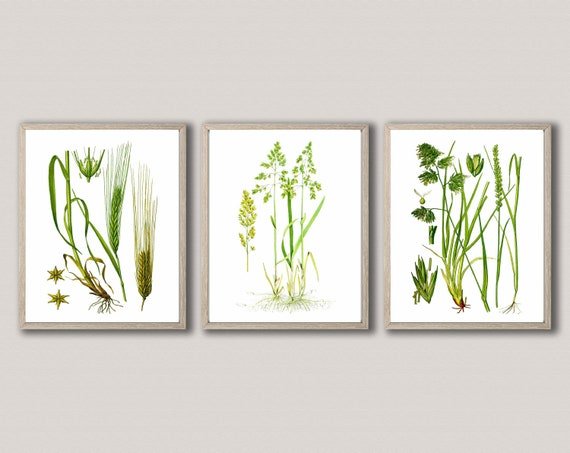 Agricultural Prints Farmland Grass Botanical Poster set of 3 WB152-154