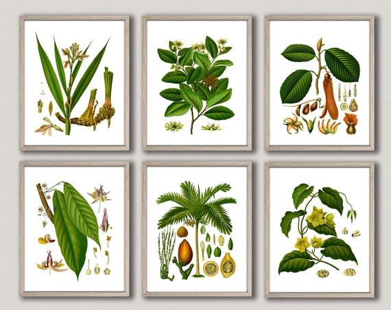 Botanical Plants Botanical Posters Medicinal Botanical Prints WBOT53-WBOT58