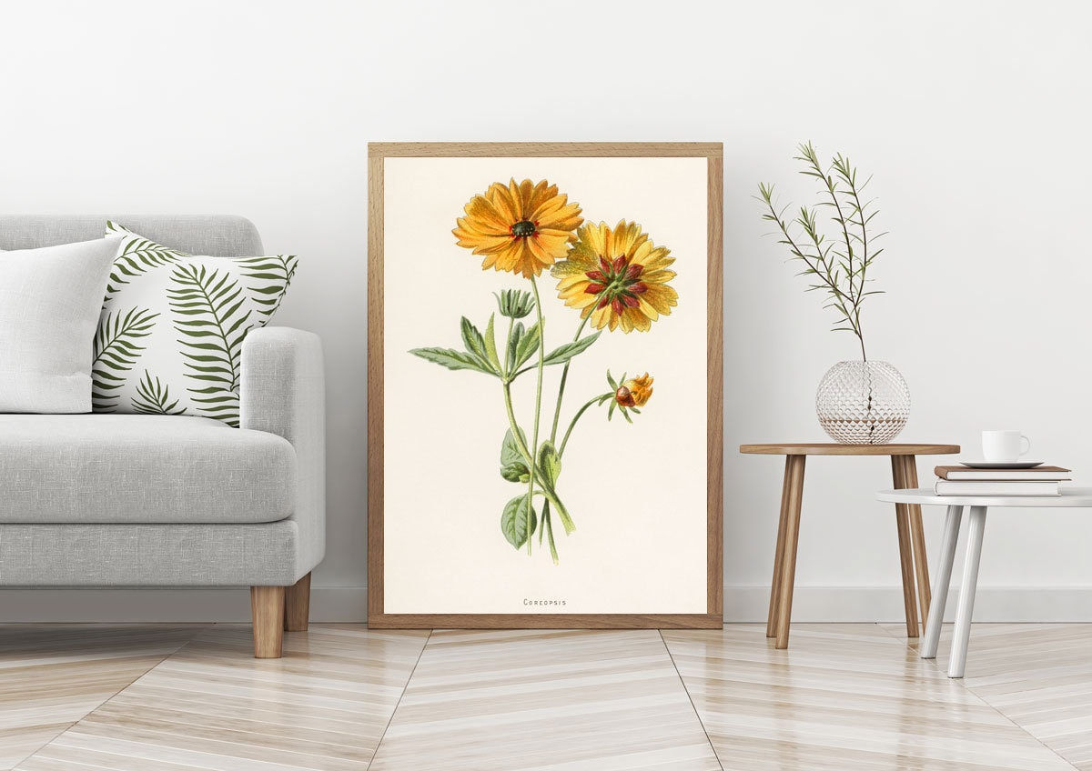 Yellow Flower Illustration Art Yellow Coreopsis Flower Drawing