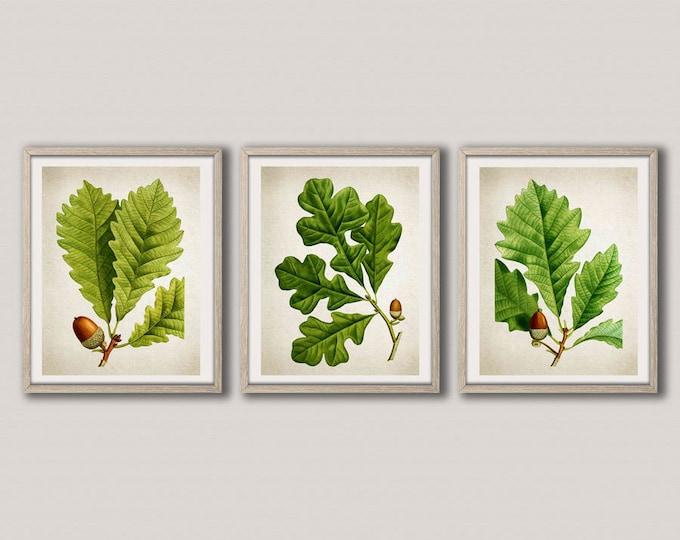 Oak Tree Botanical Leaf Prints Set of 3 Botanical Tree Prints Tree Decor Nature Wall Art Tree Poster Set for Kitchen Green Art WBOT38-WBOT40