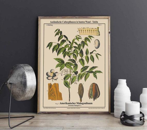 Mahogany Tree Botanical Art Mahogany Wall Art Mahogany Decor