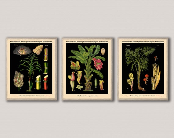 Botanical Prints Set of 3 Vintage German Botanical Posters-27,36,38