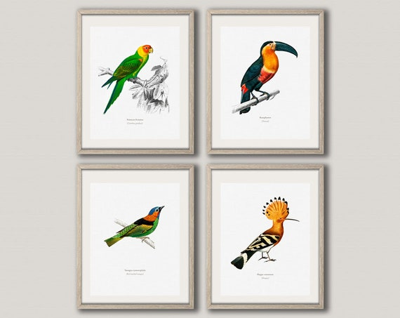 Bird Art Illustrations Vintage 19th Century Illustration Bird Prints Set of 4 Bird Posters Bird Owner Gift Toucan Print WBIRD1-2-5-6