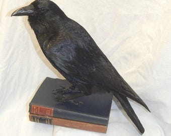 crow, best seller,, Made to order