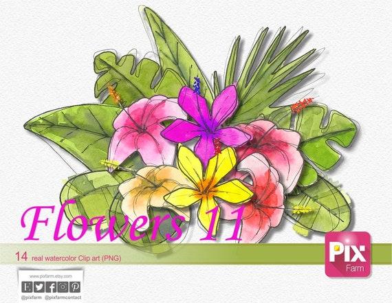 14 fleurs fond transparent Aquarelle Aquarelle fleurs pour les mariages,  invitations papier numérique, fleurs en png, Clipart, fleurs 11