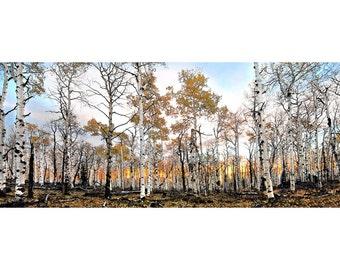Aspens, Fall, Mountains, Panoramic, Utah, Collrado, Golden Leaves, Fall Colors