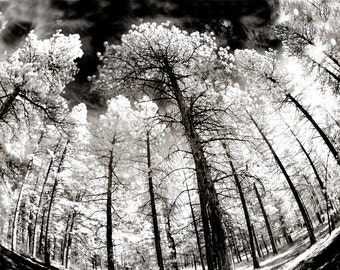 Surrounded by Giants in Sepia, Trees, Forest, Infrared, Mountains, Landscape