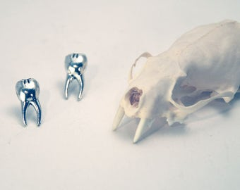 Tooth Studs
