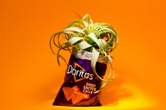 PURPLE DORITOS PLANTER