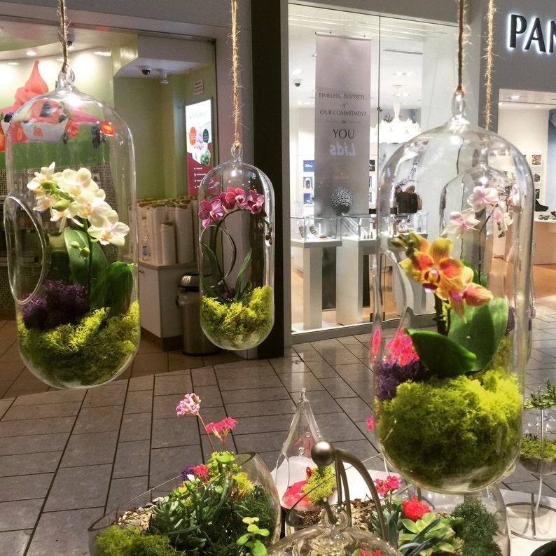 Orchid Live Plant Terrarium Glass 12 Inch Wedding Etsy