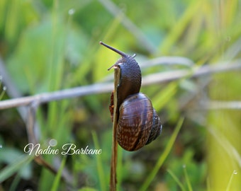 Lovely Snail After Rain , Instant Image Download , Sunny Day Photography , Digital Download ,  Snail Close Up Picture