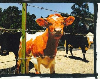 1bb7f90880c89 Warhol cow print