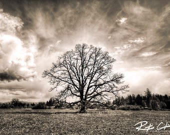 Landscape Photography, PNW, Washington State, Tree, Print