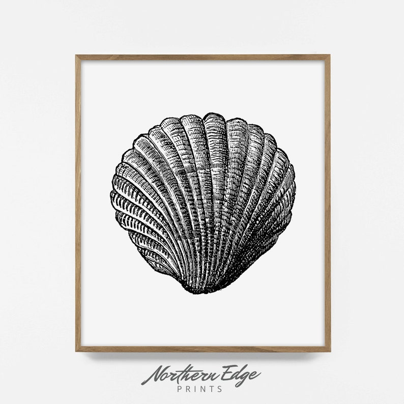 Sea Shell Tropical Beach Art Artistic Poster Printable Print Posters Summer Wall Art Printable Poster Digital