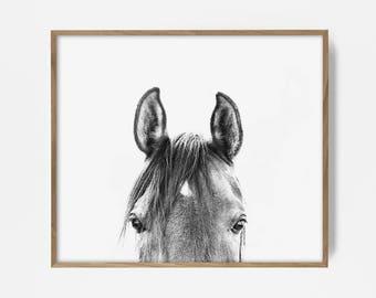peekaboo horse, bw horse print, horse photo, equestrian print, equestrian photo, equestrian decor, western decor, southwest decor, bw print