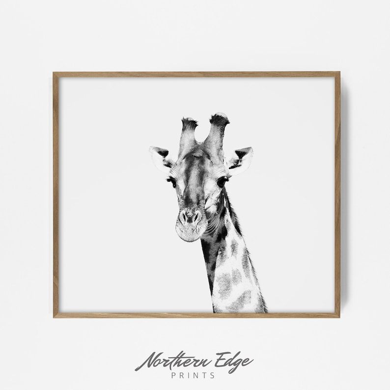 picture about Printable Giraffe Pictures titled giraffe print, printable giraffe, black and white safari, safari print, zoo animal print, zoo animal artwork, tribal print, bw safari print