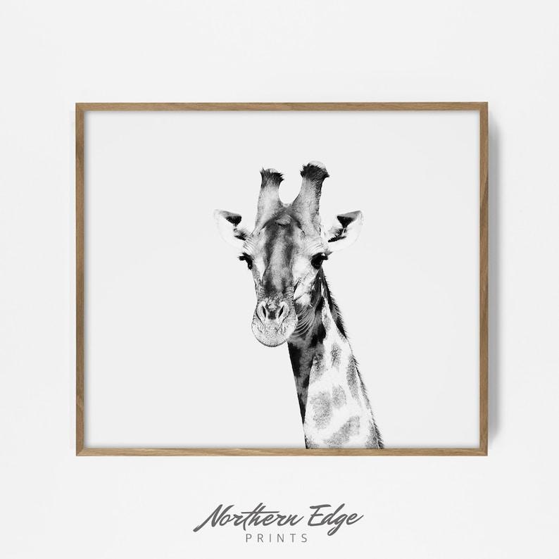 image about Printable Giraffe titled giraffe print, printable giraffe, black and white safari, safari print, zoo animal print, zoo animal artwork, tribal print, bw safari print