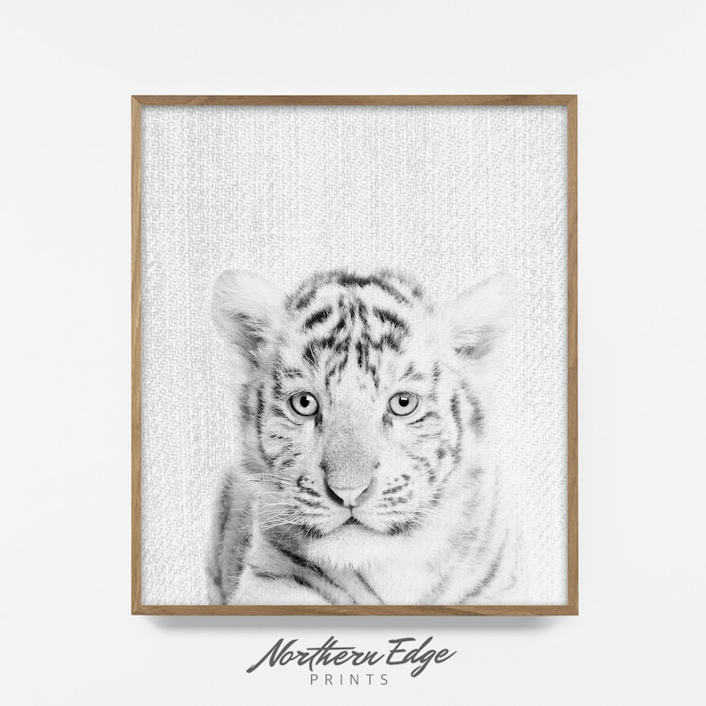 BW baby white tiger, printable tiger print, zoo animal art, nursery art,  printable, poster, modern minimalist nursery decor, zoo animal art