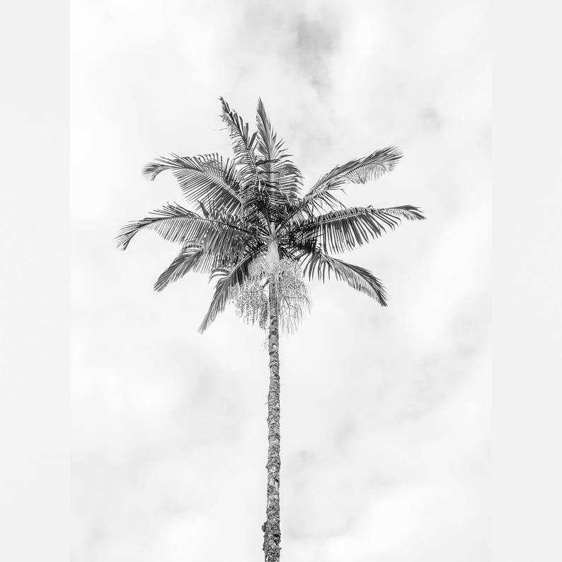 bw photography bw palm tree print tropical wall art bw palmtree bw tropical print tropical decor black and white print palm tree art
