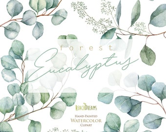 Eucalyptus. Watercolor Floral Clipart. Individual Elements. Green leaves, leaf, greenery, wild, wedding, bridal, branch, forest, digital png
