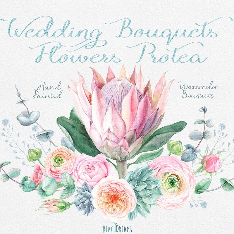 Protea Wedding Flowers: Wedding Watercolor Bouquets Protea Flowers Roses
