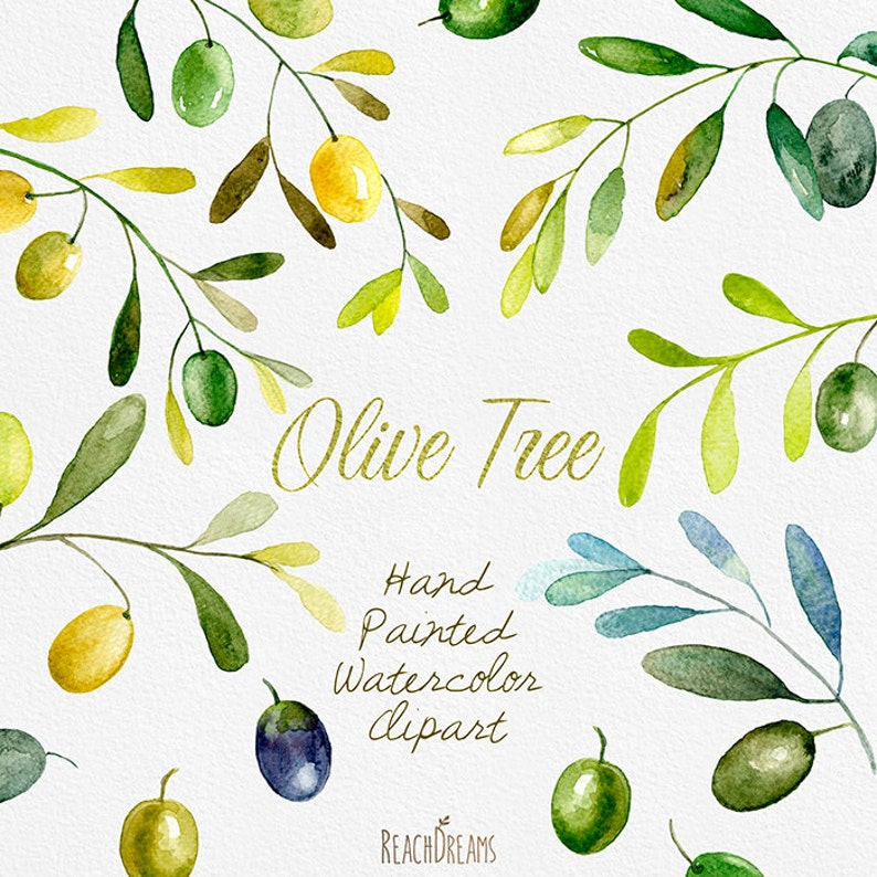 Olive Watercolor Clipart  Hand painting olive art, DIY invites, Wedding  Invitations, Rustic, Instant download