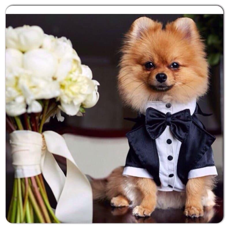 Wedding tuxedo for dogs Formal dog tuxedo Custom made dog suit image 1