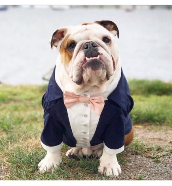 dog suit and tie