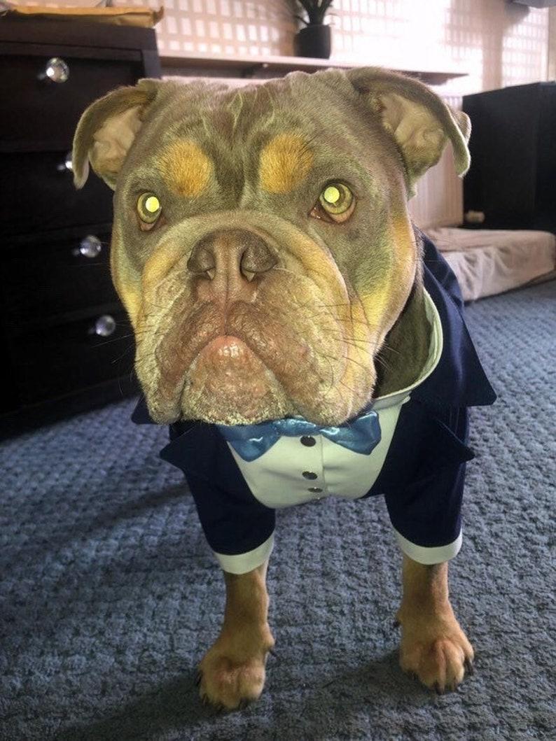 Navy blue dog tuxedo with sky blue bow tie Bespoke dog tuxedo Dog wedding attire Formal dog suit Birthday dog costume English bulldog tuxedo