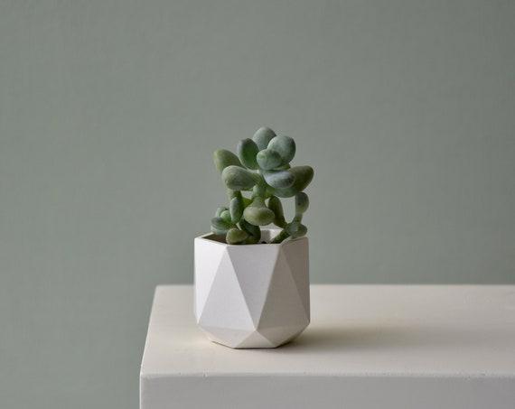 HORTUM 3.5Ø | Concrete Planter - Plant Pot - Diameter 3.5cm  (1 inch)