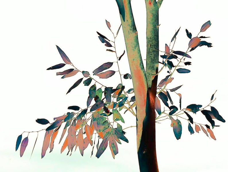 Gum leaves reflecting nature in all its bright earthy colours image 0