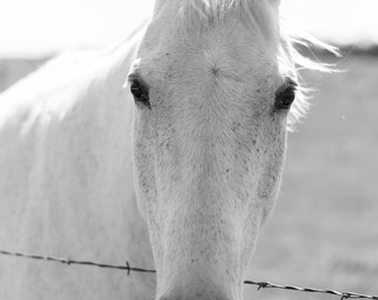 White Horse, Horse Photo, Horse Photography, Black and White, Wall Art, Horse Picture, Home Decor, Farmhouse Decor, Digital Download