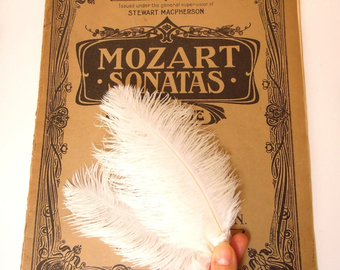 """10 Ivory White Ostrich Feathers 5-7"""" - Burlesque fluffy white feathers - White ostrich feathers - Natural feathers - Real fluffy feathers"""