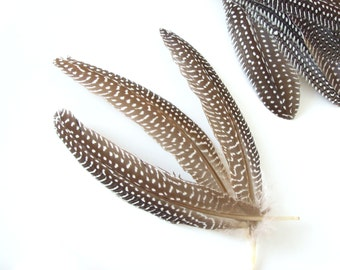 20 Natural guinea fowl feather quills 5-7 inch, Natural brown feathers,  Feathers with dots, Perlhuhnfedern