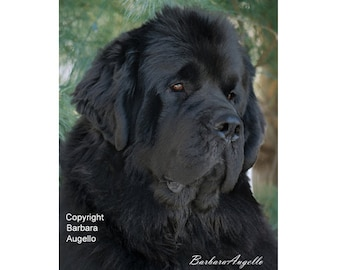 Newfoundland Dog Flag a13466130a93