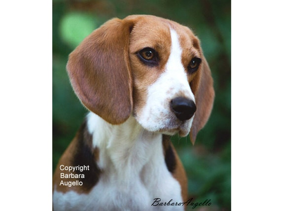 Beagle Flag Gift Art, Beagle Garden Flag