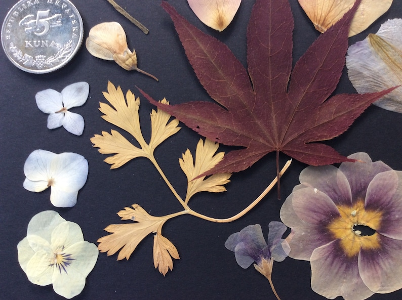 REAL PRESSED FLOWERS,mix