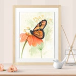 Butterfly Wall Art - Monarch butterfly on Zinnias