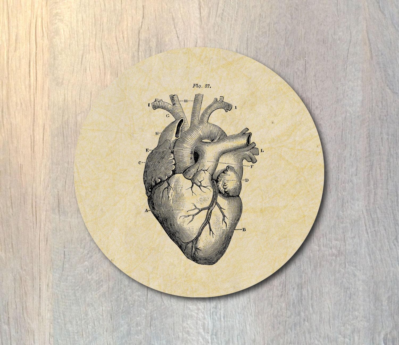 Human Heart Mouse Pad Round Anatomical Heart Human Anatomy Etsy