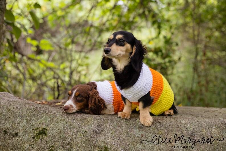 Candy Corn Dog Sweater  Small Breed  Crochet  Dog Costume  image 0