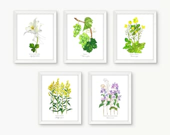 5 Print Individual Botanical Rosary Set, Luminous Mysteries