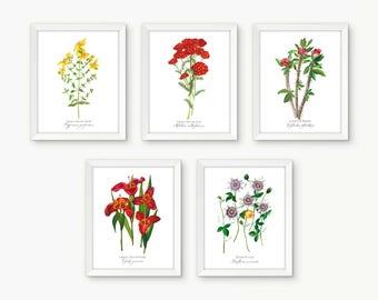 5 Print Individual Botanical Rosary Set, Sorrowful Mysteries
