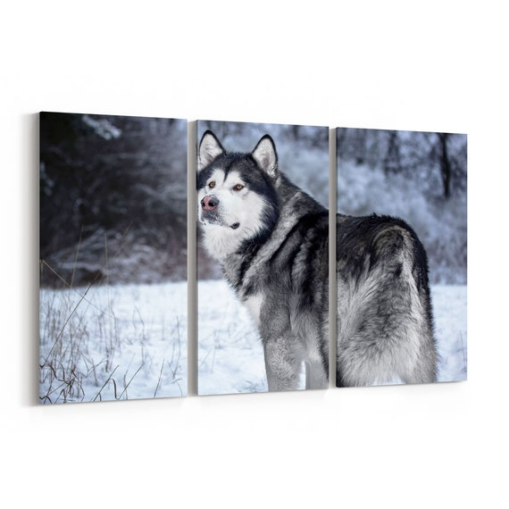 Malamute Canvas Print Malamute Wall Art Canvas Multiple Sizes Wrapped Canvas on Wooden Frame