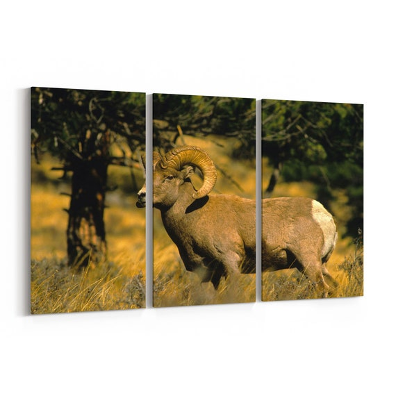 Ram Canvas Print Ram Wall Art Canvas Multiple Sizes Wrapped Canvas on Wooden Frame