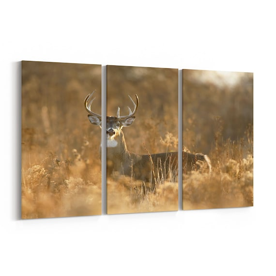 Wild Deer Canvas Print Wild Deer Wall Art Canvas Multiple Sizes Wrapped Canvas on Wooden Frame