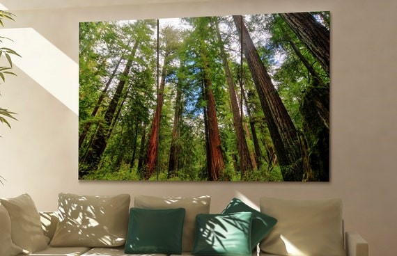 Redwood State Park wall art Redwood State Park canvas Redwood State Park canvas wall art Redwood State Park decor